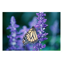 Custom Photo Factory - Butterfly in a Flower Garden Canvas Wall Art - Butterfly in a Flower Garden  Size: 20 Inches x 30 Inches . Ready to Hang on 1.5 Inch Thick Wooden Frame. 30 Day Money Back Guarantee. Made in America-Los Angeles, CA. High Quality, Archival Museum Grade Canvas. Will last 150 Plus Years Without Fading. High quality canvas art print using archival inks and museum grade canvas. Archival quality canvas print will last over 150 years without fading. Canvas reproduction comes in different sizes. Gallery-wrapped style: the entire print is wrapped around 1.5 inch thick wooden frame. We use the highest quality pine wood available. By purchasing this canvas art photo, you agree it's for personal use only and it's not for republication, re-transmission, reproduction or other use.