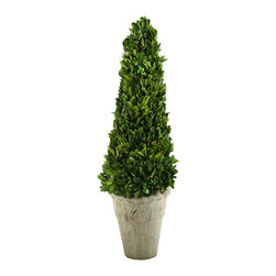 D&W Silks - 131018 D&W Silks Preserved Boxwood Cone Topiary in Stone Planter - Looking great on an end table or counter top, this preserved boxwood cone topiary piece offers the look and feel of natural boxwood, with the convenience of being a permanent greenery piece. Comes assembled as pictured with an antique reproduction stone planter. No water or sunlight necessary, this piece will hold its color and shape for many years to come.
