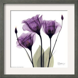 Artcom - Royal Purple Gentian Trio by Albert Koetsier - Royal Purple Gentian Trio by Albert Koetsier is a Framed Art Print set with a CHELSEA Gray wood frame and a Crisp - Bright White mat.