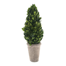 "Grandiflora Home + Decor - Rosey Boxwood Topiaries, Medium - They look real because they are. Our ""Rosey"" Preserved Boxwood Topiaries are hand made from natural boxwood that's been treated to retain its glossy, green color and soft texture. They come in a weathered white terra cotta pot."