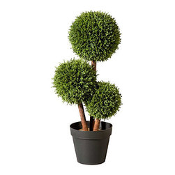 "Improvements - 26"" Cedar Pom Pom Topiary - Use the Cedar Pom-Pom Topiary to enhance your entryway, porch, sun room, or any corner of your home. With an artificial topiary, you never have to water it or trim the branches. The Cedar Pom-Pom Topiary is UV-stabilized to resist fading. Our Cedar Pom-Pom Topiaries have the beautiful look of real greenery but are maintenance-free. The charming design of the Cedar Pom-Pom Topiary is sure to dress up any home, outdoors or in. This stylish artificial topiary features cedar leaves artfully shaped into three balls on wood-look stems. Just place the weighted plastic pot inside one of our stone-look urns (sold separately) or use your own decorative planter. The durable polyethylene foliage is weather-resistant so you can enjoy the Cedar Pom-Pom for many years. This artificial topiary looks amazingly natural, even up close, and you never have to worry about watering or trimming! NOTE: Urn planter shown at left is sold separately. Benefits of the Cedar Pom-Pom Topiary:   Looking for a different style? Check our complete selection of Topiaries & Artificial Plants."
