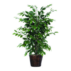 Vickerman - 4' Ficus Bush - 4' Ficus Bush in Decorative Rattan Basket