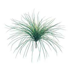 Silk Plants Direct - Silk Plants Direct Grass Bush (Pack of 12) - Silk Plants Direct specializes in manufacturing, design and supply of the most life-like, premium quality artificial plants, trees, flowers, arrangements, topiaries and containers for home, office and commercial use. Our Grass Bush includes the following: