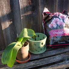 Orchids 101: Getting Started Growing Orchids at Home