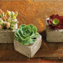 VivaTerra - VivaTerra - Succulent Cube Garden (set of 3) - These lightweight planters let you bring the succulents indoors. Over time you'll save money on fresh flower arrangements and be able to compose striking centerpieces. Also, Vivaterra gives some great advice about growing and maintaining your succulents, which is a really nice bonus.