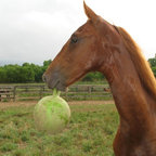 Horsemens Pride - Horsemen's Pride Jolly Ball Multicolor - 038500 - Shop for Horse Gear from Hayneedle.com! The Horsemen S Pride Inc Jolly Ball is a smart and effective way to keep your horses happy and occupied. This durable equine toy is a great way to keep your horse happy and gives it a way to expend energy throughout the day. Toss this toy out to pasture or hang it in a stall to keep your horse well mannered.About Bradley Caldwell Inc.On February 1996 Caldwell Supply Company and New Holland Supply merged and a new and unique approach to distribution was created. The result is Bradley Caldwell Inc. a company with more than 100 years of industry experience. Located in the Pocono Mountains of Eastern Pennsylvania its service area covers 17 states and extends from Maine to Michigan to North Carolina. BCI is the only full-line distribution warehouse in the region with more than 30 000 products in six distinct categories - pet equine farm & home lawn & garden pond and wild bird. BCI cares about its customers and works hard every day to improve its retailers' position and profitability within the marketplace. Bradley Caldwell Inc. sets itself apart from the competition with its industry experience outstanding selection of product competitive pricing and commitment to excellence and 100 percent satisfaction in customer service.