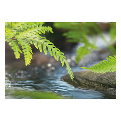 "Along the River Wall Mural - Along the River wall mural captures a beautiful moment on a flowing river. Running water has always had a tranquil meditative pull and this mural quietly inspires a peaceful awe. Fresh fern leaves linger above the glistening water and a stoic rock. This photorealistic mural is 72"" x 50"" and comes in one easy to install piece."
