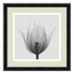 Amanti Art - Triumph Tulip Framed Print by Steven N. Meyers - Time for you to cultivate a new perspective? This beautiful bloom is a hybrid of traditional photography and x-ray technology.