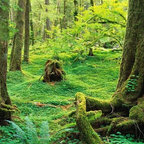 Wallmonkeys Wall Decals - Mosses Covering Rainforest Floor Wall Mural - 60 Inches W x 48 Inches H - Easy to apply - simply peel and stick!