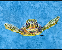 Caroline's Treasures - Coming At U Loggerhead Turtle Indoor Or Outdoor Mat 18X27 8653Mat - Coming at U Loggerhead Turtle Indoor or Outdoor Mat 18x27 8653MAT INDOOR / OUTDOOR FLOOR MAT 18 inch by 27 inch Action Back Felt Floor Mat / Carpet / Rug that is Made and Printed in the USA. A Black binding tape is sewn around the mat for durability and to nicely frame the artwork. The mat has been permenantly dyed for moderate traffic and can be placed inside or out (only under a covered space). Durable and fade resistant. The back of the mat is rubber backed to keep the mat from slipping on a smooth floor. Wash with soap & water.