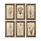 Uttermost - Wheat Grass Framed Art Set/6 - This Set Of Prints Features Wooden Frames Finished In Bronze Undertones With Brown And Black Distressing And A Gray Glaze. Prints Are Under Glass.