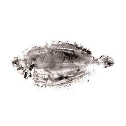"""""""Little Black Sole"""" Artwork - This is a small edition of 5 signed and numbered japanese gyotaku method mono prints of a small sole."""