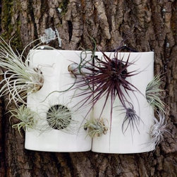 Airplant Wall Tiles from Pigeon Toe - This is such a clever idea. Air plants live in trees in the wild. This a great looking way to facilitate that growth. I like how they're truly tiles, made to group together. I can see different colors peeping out of the holes making a great addition to the back yard landscape.