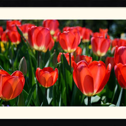 Amanti Art - In the Garden Framed Print by Andy Magee - A field of tulips greets the spring with warm and bright color; this fine art photo print would make a welcome addition to the wall of a flower enthusiast's office or home.