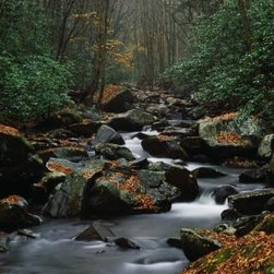 Wallmonkeys Wall Decals - Stream Running through Forest Wall Mural - 72 Inches H - Easy to apply - simply peel and stick!