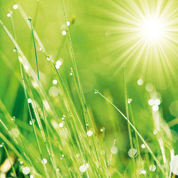 Platin Art's Deco Glass Wall Decor- Lush Morning Grass - Features & Specifications