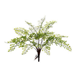 Silk Plants Direct - Silk Plants Direct Maidenhair Fern Bush (Pack of 12) - Silk Plants Direct specializes in manufacturing, design and supply of the most life-like, premium quality artificial plants, trees, flowers, arrangements, topiaries and containers for home, office and commercial use. Our Maidenhair Fern Bush includes the following: