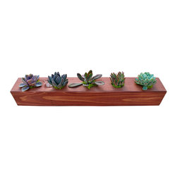 "Flora Pacifica - Five Plant Cedar Centerpiece - At 24"" long and 3.5"" square, this Cedar Succulent centerpiece holds five beautiful Echevarias.  The cedar is sealed with a light stain that protects the wood and gives it a rich look.  The plants are Echevaria Elegans, Setosa, Nodulosa, Tolimensis and Perle von Nurnberg."