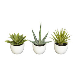 Nearly Natural - Southwest Collection (Set of 3) - Enjoy the simple beauty of the incredible Agave plant with our three-piece Southwest Agave Collection. Each piece is a sample of the different varieties of Agave. Enjoy a 5.5 inch high thick green leaved Agave, the sparsely leaved 8.5 high version, or the multi leaved 7 inch high spiky piece. Put them together or around the house for a Southwestern or Central American feel.