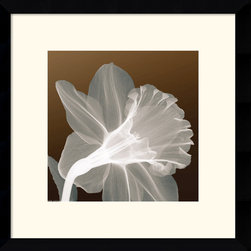 Amanti Art - Ruffled Elegance Framed Print - By using x-rays instead of light, an inner vision is revealed, allowing nature to show textures, details, and shadows that would otherwise not be seen.