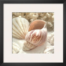 Artcom - Coral Shell II by Donna Geissler - Coral Shell II by Donna Geissler is a Framed Art Print set with a SOHO Thin wood frame and a Polar White mat.