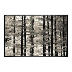 """Ana V Ramirez Framed Print, Into the Woods, No Mat, 28 x 42"""", Black - Black and white offers the perfect medium for these tall trees, with dark trunks standing in stark relief against their many branches full of ephemeral leaves. Photographed at Valley Forge Park in Pennsylvania. 11"""" wide x 13"""" high 16"""" wide x 20"""" high 28"""" wide x 42"""" high Alder wood frame. Black or white painted finish; or espresso stained finish. Beveled white mat is archival quality and acid-free. Available with or without a mat. {{link path='shop/accessories-decor/pb-artist-gallery/artist-gallery-ana-ramirez/'}}Get to know Ana Ramirez.{{/link}}"""