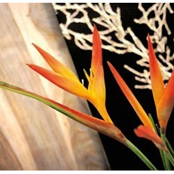 Walls Republic - Strelitzia Flower Wallpaper Mural M9042 - If you love florals you'll love this exotic inspired wallpaper. The strelitzia flower looks like no other and is the perfect way to express your individuality. Due to this item being a custom order, it takes longer to ship than our regular products.