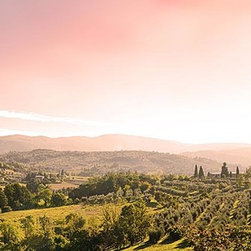 Magic Murals - Tuscan Landscape Panorama Wall Mural -- Self-Adhesive Wallpaper by MagicMurals - A purple hue is cast in the sky above this bucolic panoramic landscape of Tuscany, Italy.  Hills in the background and valleys in the midground serve as the backdrop for the vineyards and olive trees.