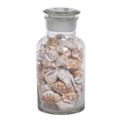 Zodax - Zodax Coastal Apothecary Jars with Cone Shells - Zodax - Jars / Canisters - CH3343 - Coastal Apothecary Jars