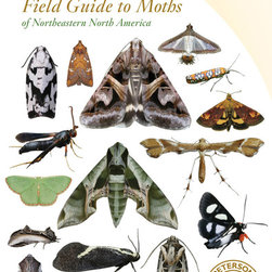 Peterson Books - Peterson Field Guide to Moths - There are thousands of moth species in the northeast of North America, and while it might seem that they are all drab grays and browns, there is actually a startling variety. They come in a rainbow of colors, from brilliant oranges and pinks to soft green.