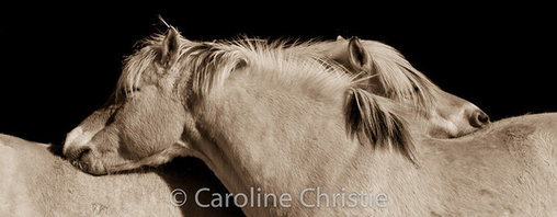 "Caroline Christie - Siblings, 48"" X 72"" - Metallic C-Print printed on museum quality archival paper."