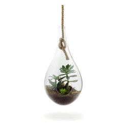 Hanging Terrarium - I strive to be a good plant parent, but usually I'm neglectful at best. That's why I love a terrarium; the shape keeps moisture in, meaning your plants need less tending.