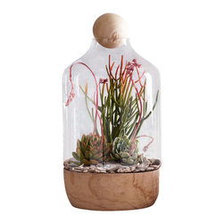 Copenhagen Terrarium - Large - One of the hottest trends that never goes out of style are terrariums. Perfect for either objects of art, succulents or air plants, the Copenhagen Large Terrarium has a chic appeal with its mouth blown glass vessel and Paulownia Wood base that is versatile and can be seamlessly integrated into a guest room or living room of various styling. Topped with a wooden sphere to finish the look, this terrarium, with its clean lines and natural components, is suitable and breathtaking in any setting.