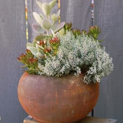 """We Love Making Planters - An example of the planted arrangements we have available for purchase, this one features several species of crassula, kalanchoe in a terracotta orb.  Our planters are well grown in """"experienced"""" pots and planters so when you bring them home, they have that grown in place look."""