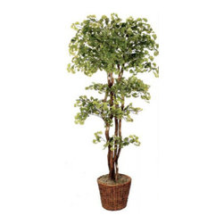 Oriental-Décor - 84-Inch Natural Wood Gingko Tree - Plant this tree in your living space and bring the outside in. The silk tree is so authentic looking you'll be waiting for the leaves to fall.