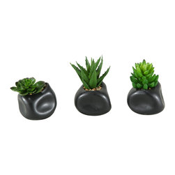 """D&W Silks - Artificial Mixed Echeveria, Aloe and Succulents in Matte Black Ceramic, Set of 3 - It's amazing how much adding a plant can change the look of a room or decor, but it can be difficult if your space is not conducive to growing plants, or if you weren't exactly born with a """"green thumb."""" Invite the beauty of nature into your home without all the upkeep with this maintenance-free, allergy-free arrangement of artificial mixed echeveria, aloe and succulents in a matte black ceramic. This is not a living plant."""