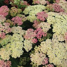 Must-Grow New Perennials for 2013