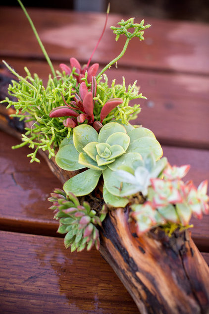 diy project a driftwood centrepiece alive with succulents