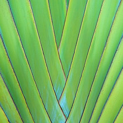 Magic Murals - Tobago Palm Leaf Detail Wallpaper Wall Mural - Self-Adhesive - Multiple Sizes - - Tobago Palm Leaf Detail Wall Mural