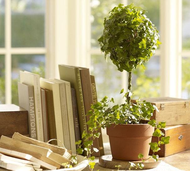 Traditional Plants Traditional Plants