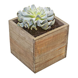 """luludi living frames - Luludi Living Frames Palavo Succulent - Our palavo succulent contains a pre-planted easy-care succulent blossom set inside an unstained flat bottomed box ideal for indoor or outdoor use. Set it upon a windowsill or create an arrangement of multiple boxes as a tabletop centerpiece for your next party, available as shown or may be custom-tailored, dimensions: 6"""" width x 6"""" height x 6"""" depth, weight (approx): 1 lbs, each garden is a unique landscape so finished pieces may vary, Suggestion for care:, succulents thrive in bright light, confirm soil is dry before watering, keep in mind cacti are potted in a sandy soil sand is powdery when dry and holds together when moist, most cacti use a lot of water during spring and summer and hardly any thru winter"""