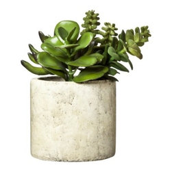Floral Table Arrangement Green Mixed Succulent - This concrete planter filled with succulents feels fresh and modern. I would love to keep one on my desk. Fresh green plants add so much to a space, and I would count this petite potted plant as just the beginning of a larger collection.