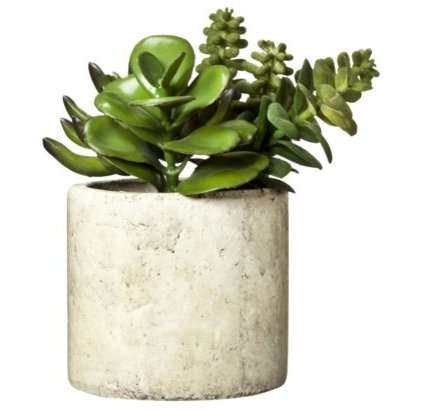 contemporary plants by Target