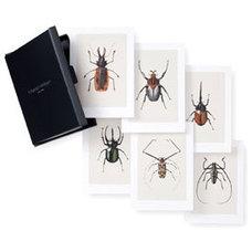 Eclectic Artwork Set of 6 Bug Prints