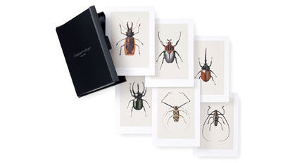 eclectic artwork Set of 6 Bug Prints