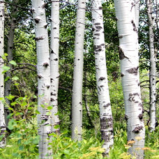 Great Design Plant: Aspen