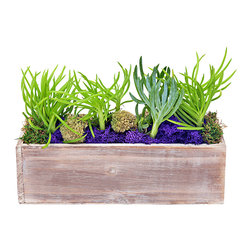 """luludi living frames - Luludi Living Frames Woodland - Our woodland planter adds a rustic touch to its surroundings. Made of all natural wood and filled with assorted succulents atop brown pebbles or moss, this planter is an easy care indoor or outdoor display, available in the following styles or may be custom tailored:, succulents with pebbles, succulents with moss, our terrariums are unique landscapes so finished pieces may vary:, dimensions: 11. 75"""" width x 4"""" height x 4"""" depth, weight (approx): 1. 7 lbs, planter is made of natural wood so color and surface will vary, contact us to inquire about optional moss colors, Suggestion for care:, moss, moss requires no care if it becomes dry and brittle mist with water, succulents, succulents thrive in bright light, confirm soil is dry before watering, keep in mind cacti are potted in a sandy soil sand is powdery when dry and holds together when moist, most cacti use a lot of water during spring and summer and hardly any thru winter"""