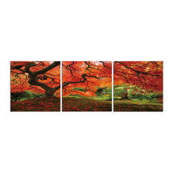 Elementem - Japanese Maple  Print - Our Japanese Maple print is a spectacular triptych photograph of the famous Japanese Maple tree in Portland's Japanese Garden.  It is printed on vinyl and mounted on a wooden MDF frame.  We laminate over each of our photos to allow them to be easily cleaned and protected.  Packed with wall hangers, they are easy to install.
