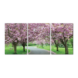 "Wholesale Interiors - ""Spring in Bloom"" Mounted Photography Print Triptych - Flowers in place of foliage adorning tree branches are among the first signs of spring. The promise of new life abounds in this pristine photograph print."