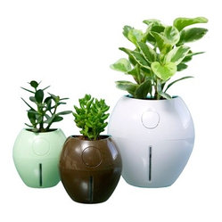 Grobal Self-Watering Planter Product Detail